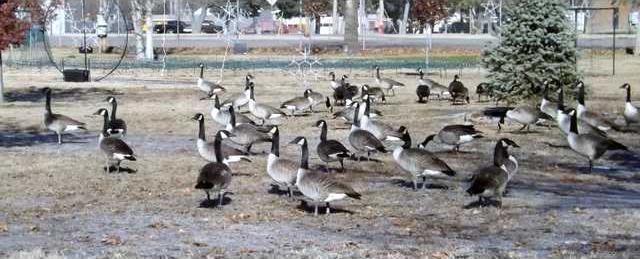zoo slt ducks