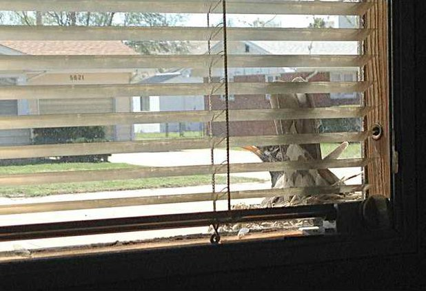 new deh robin nesting pic 1