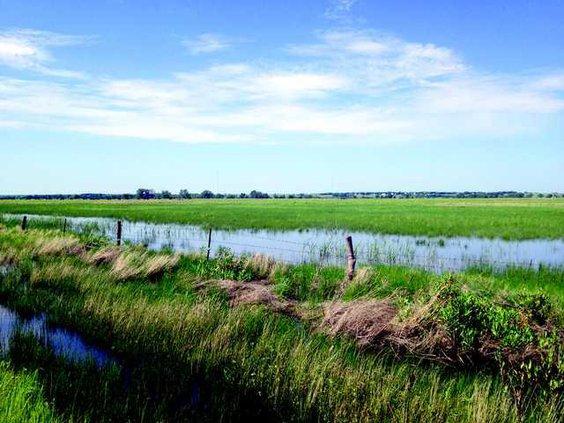new vlc Cheyenne Bottoms nature preserve a wetlands again