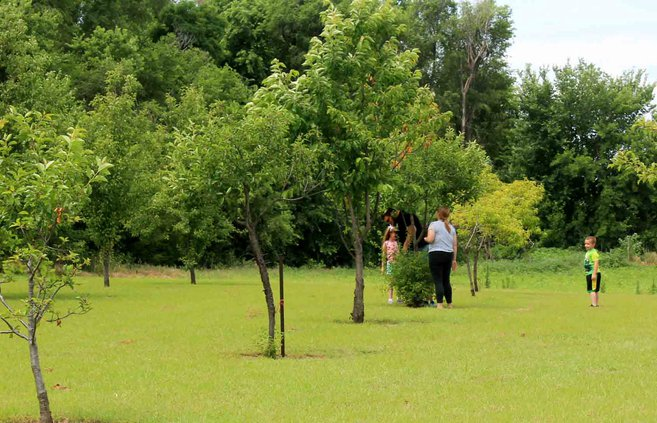 new_vlc_PRIDE orchard pic 1.jpg