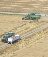 new_deh_wheat harvest update photo.jpg